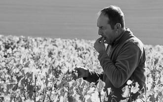 Weingut Elemart Robion