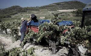 Weingut Celler de Capcanes