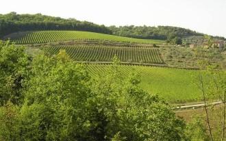 Weingut Le Cinciole